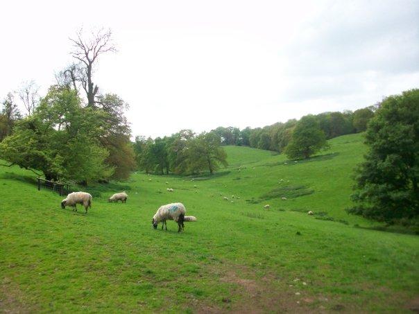 The Sheepwalks