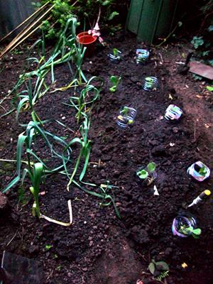 gardeningp